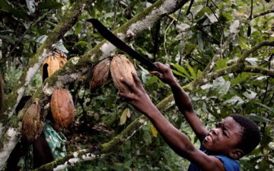 CHILD LABOUR IN COCOA